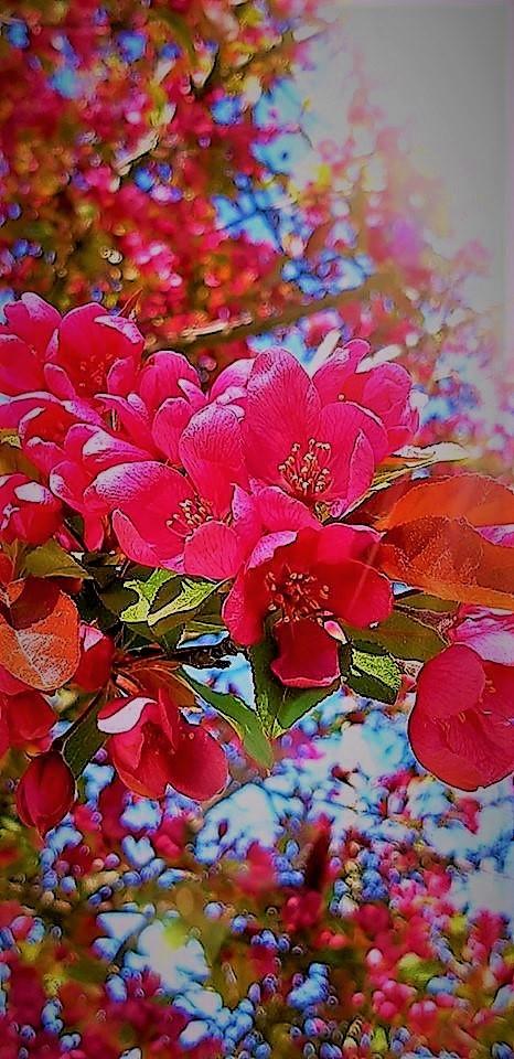 The only lasting beauty is the beauty of the heart. ~ Rumi  #CherryBlossom #Sakura #Rumipic.twitter.com/4ZIjCjVSam
