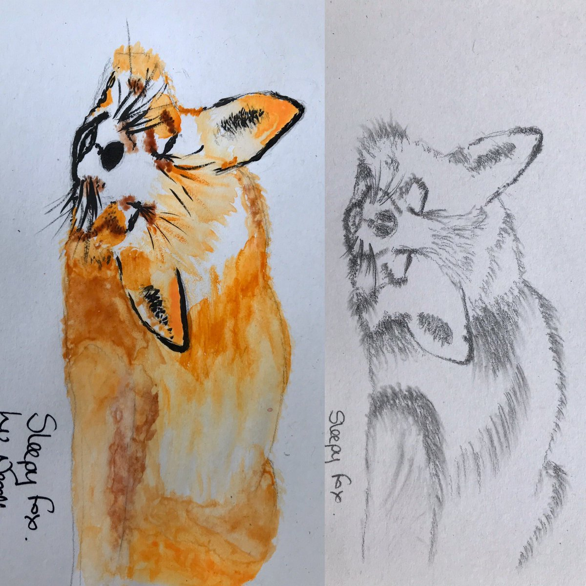Sleepy fox in graphite and in water colours and ink drawn a week apart.  People don't necessarily recognise the top image as a fox without its distinctive, vibrant coat #Contrast #Painting #InTheMomentpic.twitter.com/fmDtEMKRy1