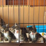 すぐにでもお迎えに行きたくなる猫の親子のシンクロ写真に8千人がメロメロ