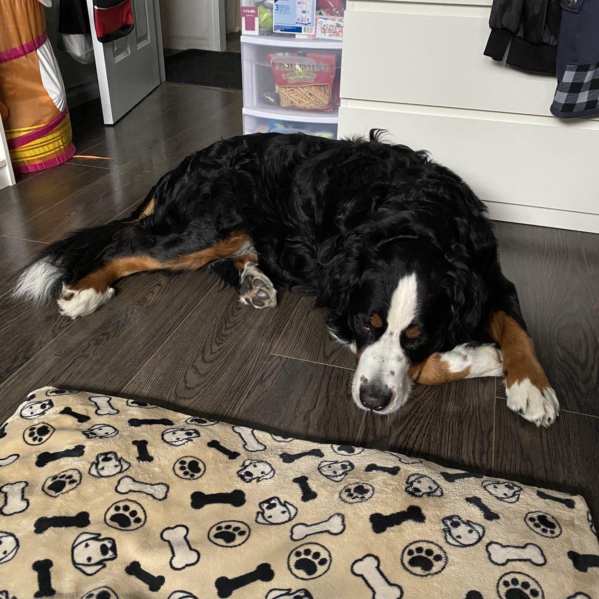 Monday mornings...  #dogsoftwitter #MondayMood pic.twitter.com/vUoodCLtAI