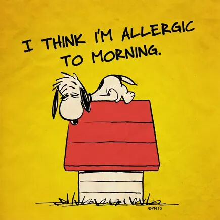 #mondaythoughts    Me, every morning. <br>http://pic.twitter.com/Be1E36GnwF