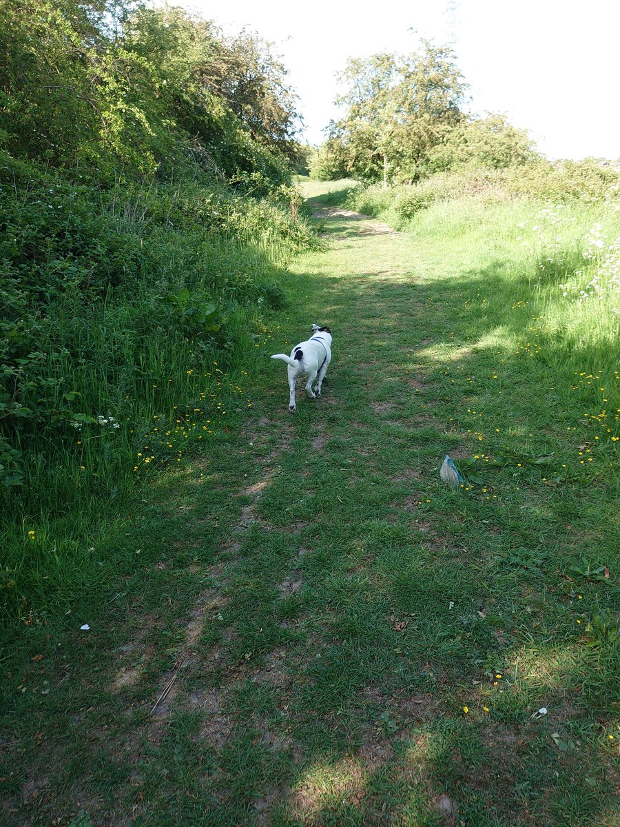 4 hrs in the great outdoors, without leaving DN8 once! The hound enjoyed new trails Id forgotten from my childhood, and all three of us enjoyed extended time outdoors. Barely saw a soul. Maybe we dont always need to travel for a proper ramble.