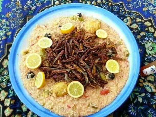 #Jaipur: Too Many Locusts ? Ideas to Help You Use Them !! pic.twitter.com/k4kS3W9591