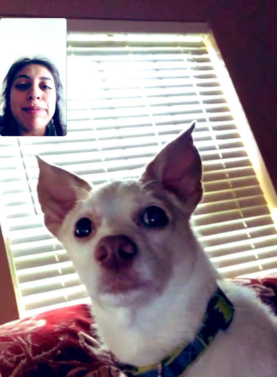 test Twitter Media - FaceTime with my family dogs 🐶 this morning . I miss them so much 😭😭 #DogsofTwittter https://t.co/lQX4exwxW9