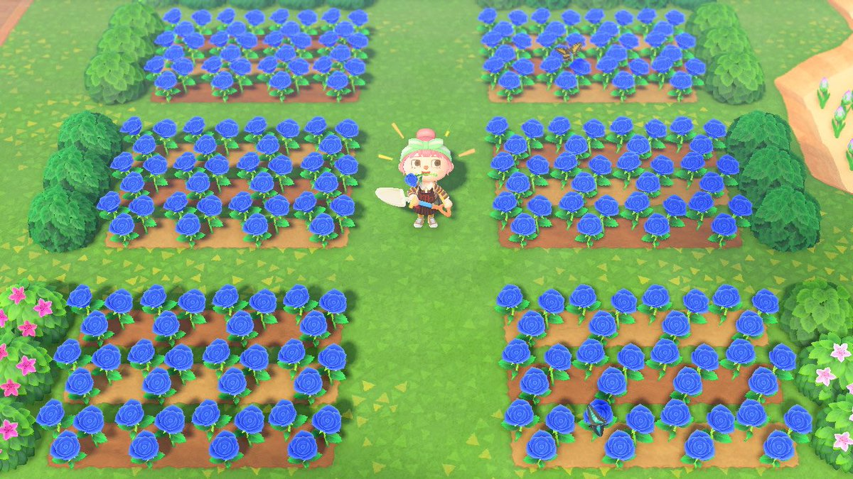 💙BLUE ROSE GIVEAWAY - can u tell i went a little overboard with breeding?? 6 randomized winners will each get 12 roses to keep or share with friends 💙 ends in 3 days, rules in the tweet below this one! #acnh #ACNHgiveaways https://t.co/5dksp8JHy9