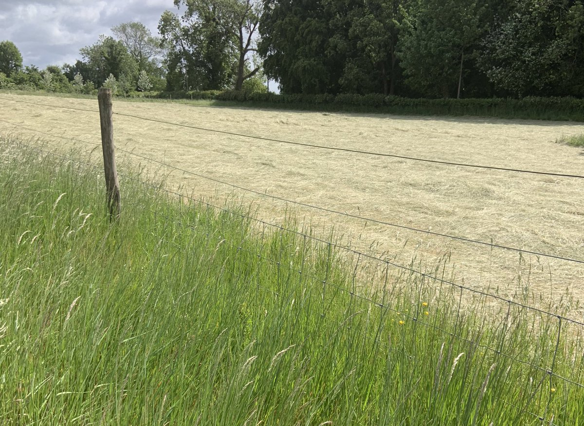 Hay Days... Cut, sun and wind dried.  Baled and taken for storing #Hay #HayFestival2020 #farmers are #wonderful #haymaking #makehaywhilethesunshines  #countryside #treats   pic.twitter.com/LNO4W4f3xn
