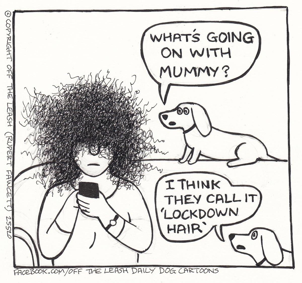 Bad Hair Day  #StayAlert #CoronavirusPandemic2020 #SaveTheDay #TheLockdown #HomeLife #LifeInLockdown #BadHairDaypic.twitter.com/m5bqdr6LHy
