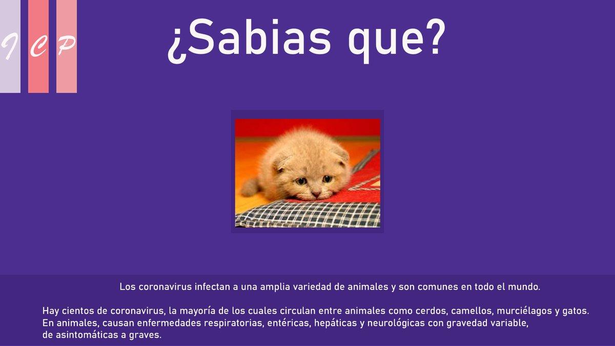 Oh nooooo! #datocurioso #Corona #coronavirus #consejos #COVIDー19pic.twitter.com/11Y6Ujzfr3
