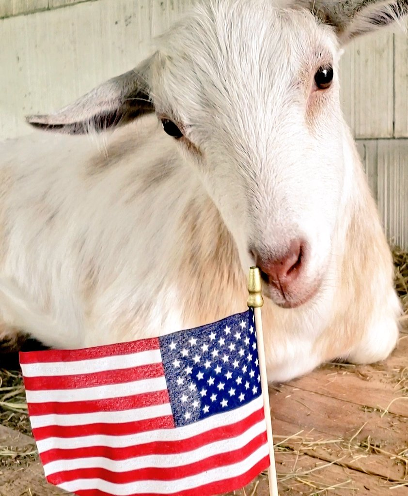 #Goats wishing those who serve,  did serve, and will one day serve, a very peaceful and pleasant #MemorialDay2020 pic.twitter.com/S9YwF1QTeF
