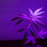 Image for the Tweet beginning: #cannabis #weed #marijuana 18 Best