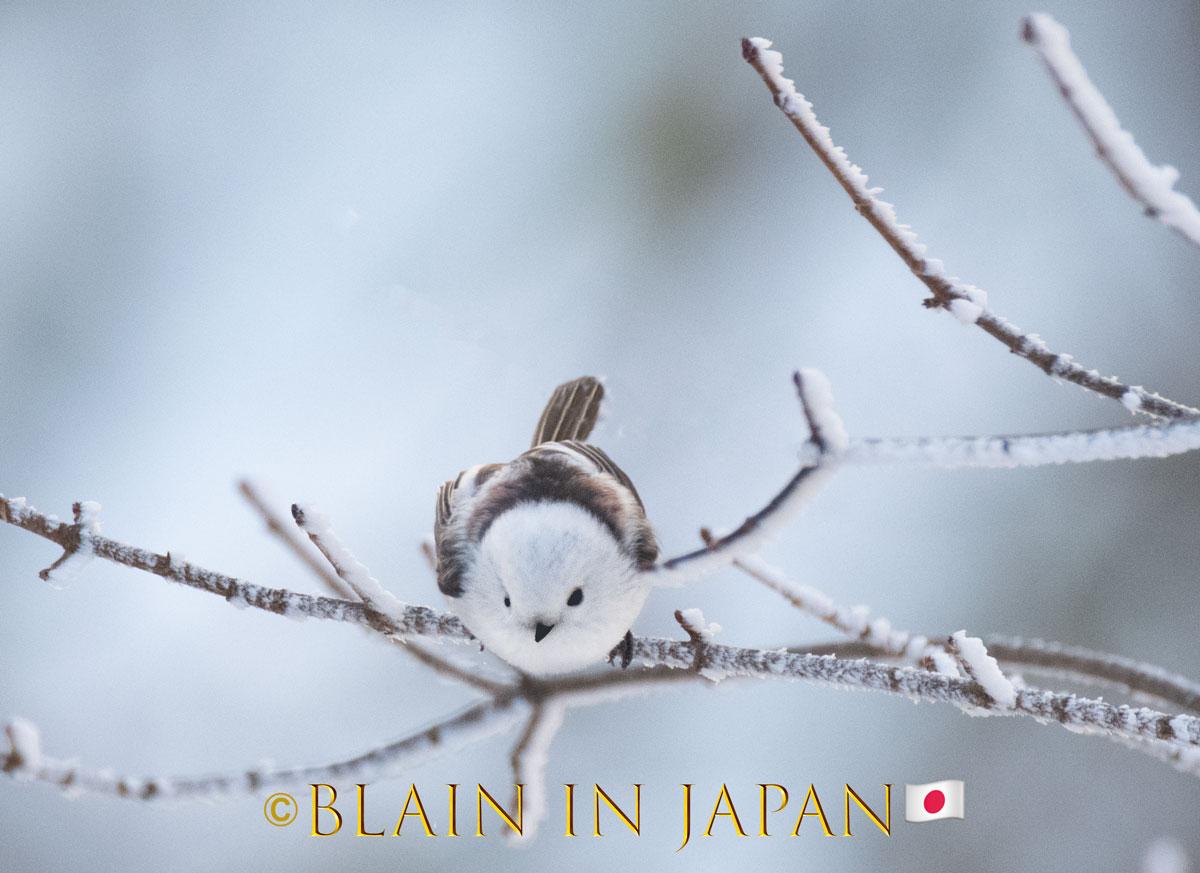 Bushtit doing surveying #Japan #visitjapan #japanfocus #photography #birding #birdingphotography #travel #travelphotography #longtailedtit  #japandreamscapes #hokkaido #日本 #バードウォッチング #旅 #旅行 #ファインダー越しの私の世界 #北海道 #写真 #写真好きな人と繋がりたいpic.twitter.com/NFazFSz0hp