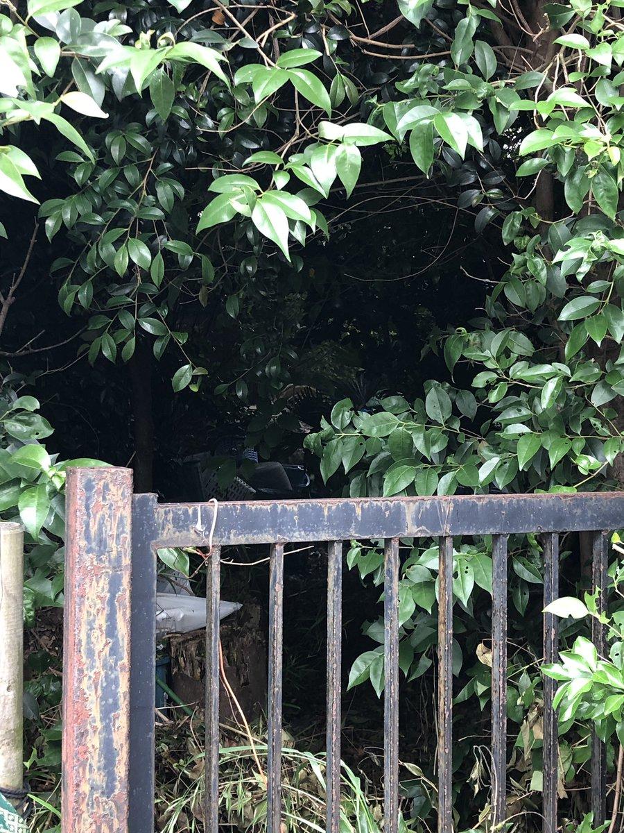 "Entrance to one of the ""spooky"" houses in my neighbourhood of #Tokyo #japanpic.twitter.com/pzo0NXgpRA"