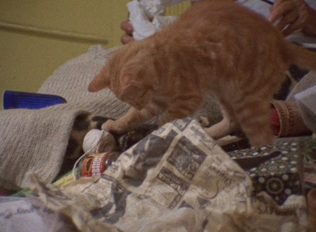 One thing people don't talk about with GREY GARDENS is that it's a landmark piece of Cat Cinema