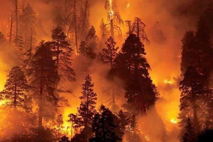 """Saddest news of today """"Devbhoomi in Fire"""".  Forest fire breaks out in #Uttarakhand 🙏बाबा केदारनाथ रक्षा करो अपने अंश की 🙏 #UttarakhandForestFire https://t.co/cRY57GA09f"""