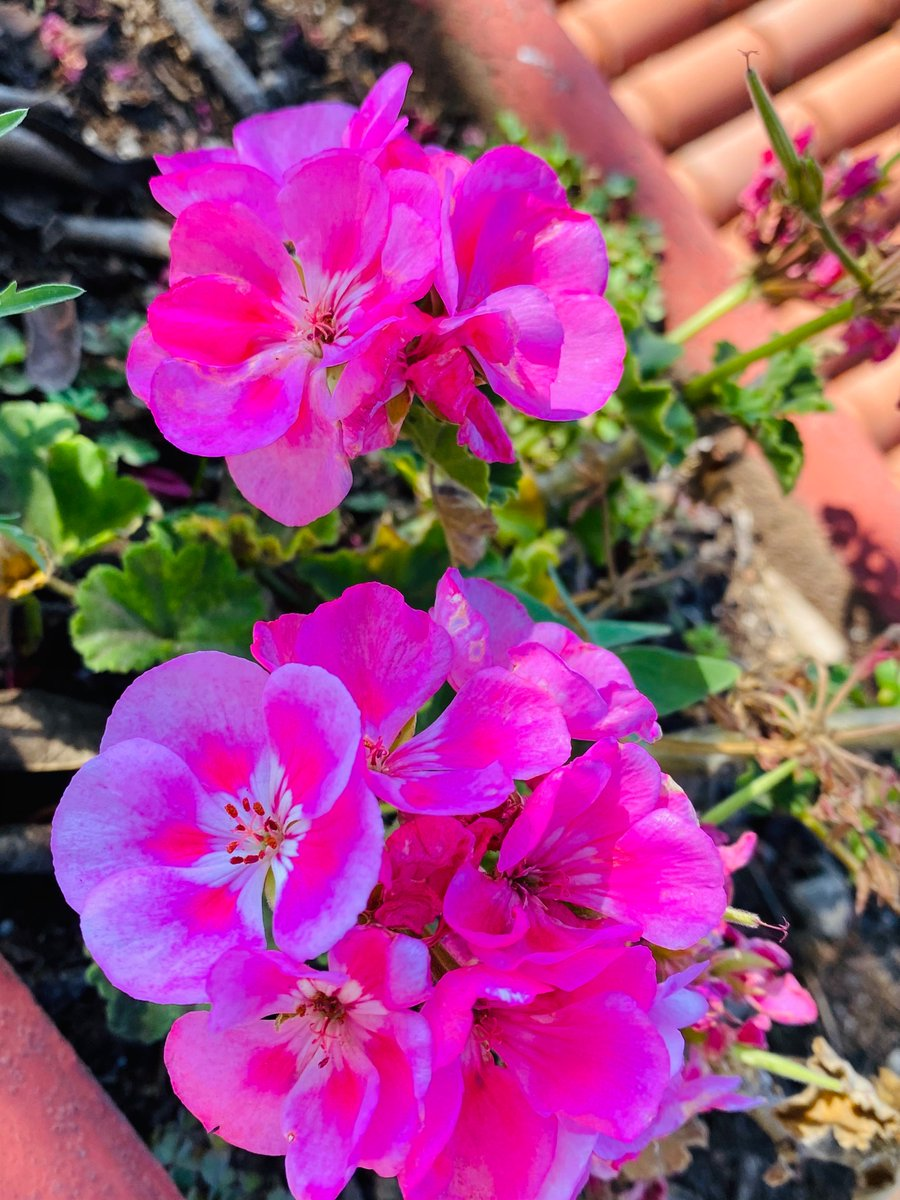 Morning with flowers  #Flowers #flores pic.twitter.com/XOLnKVKvOT