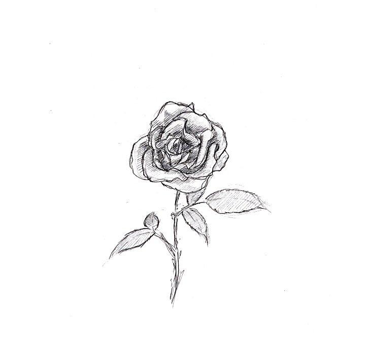 白黒の薔薇。  #薔薇 #バラ #落書き #フリーハンド #素描 #スケッチ #イラストレーション #デッサン #illustration #sketch #drawing #pensildrawing #art #aritist #絵描きさんと繋がりたい https://t.co/Z4cq12QC1U