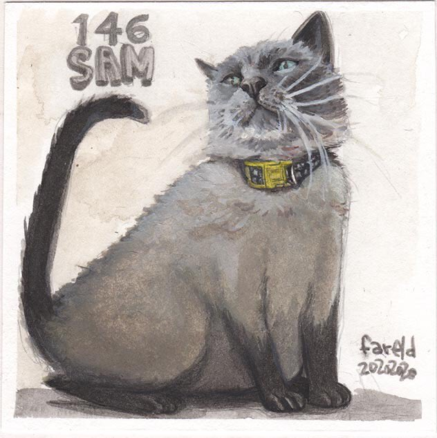 #dailydrawing 146 of 366, sam the cat. #watercolorillustration #cat #illustration #originalart #Raphael8404 #brushpic.twitter.com/Q4akI3pfrR