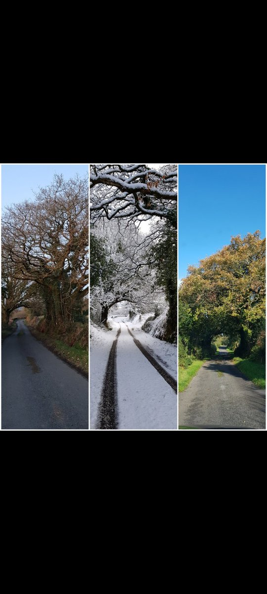 #collage #summer #winter #autumn #countryroads