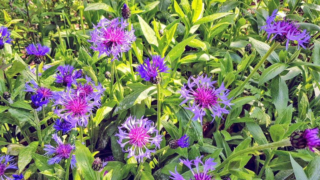 Sunlight on park flowers #sunshine #SpringTime #Flowers #colour #Smile #TuesdayMorning #nature #walking #park #greenspacepic.twitter.com/jb7anuG2jy