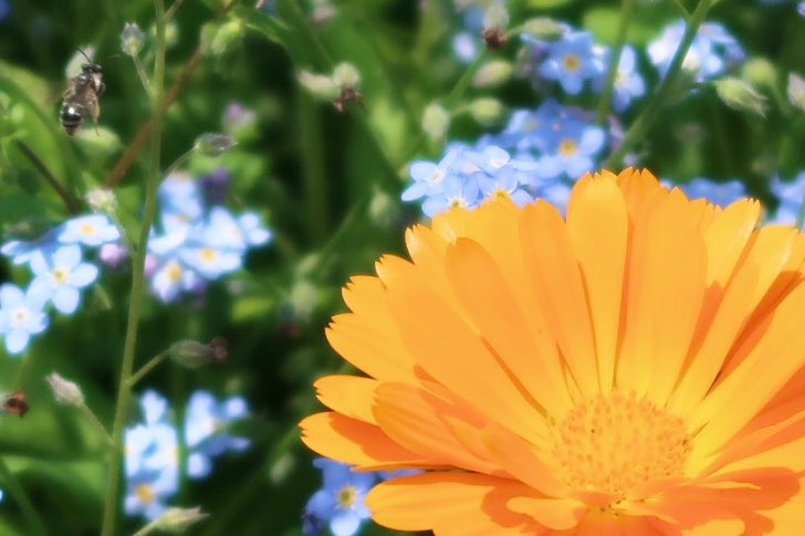 Flowers  #写真好きな人と繋がりたい pic.twitter.com/7QL4nl97JC