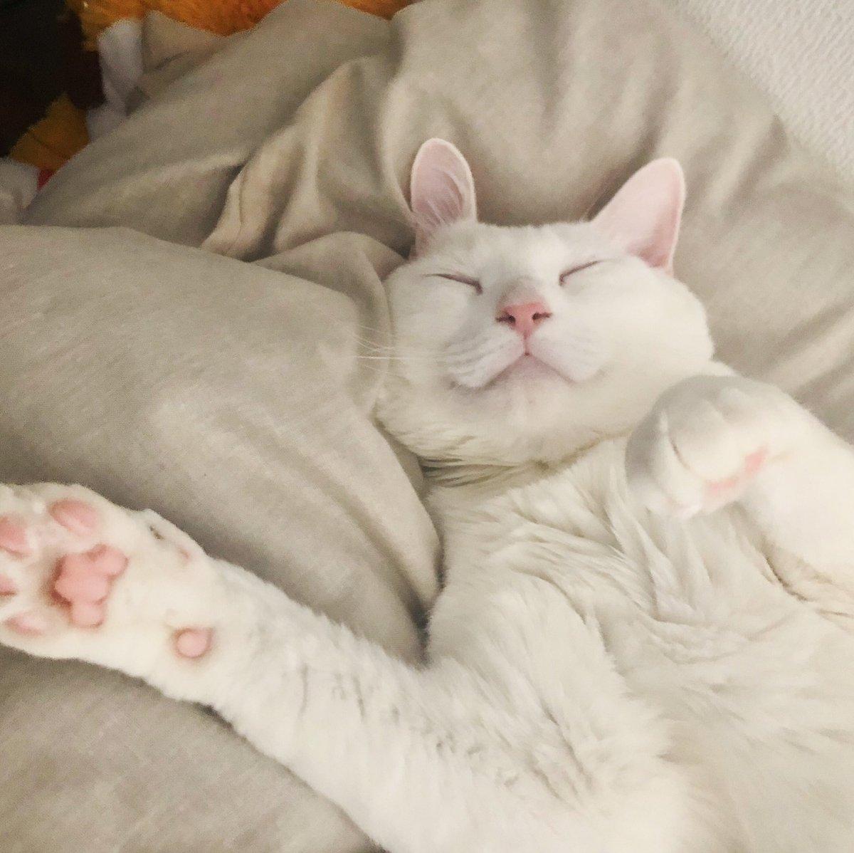 Good Smile   #猫 #白猫たもpic.twitter.com/T5PHeyYvZ6