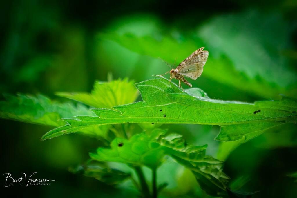 Vierbandspanner . . . . . #nuts_about_wildlife #animalelite #splendid_animals #shots_of_animals #animals_captures #all_animals_addiction #marvelouz_animals #exklusive_animals #nature #exclusive_wildlife #naturelovers #bns_nature #wildlife_perfection #nb_… https://instagr.am/p/CAo7bSPAMF6/pic.twitter.com/M0mIaqC1ki
