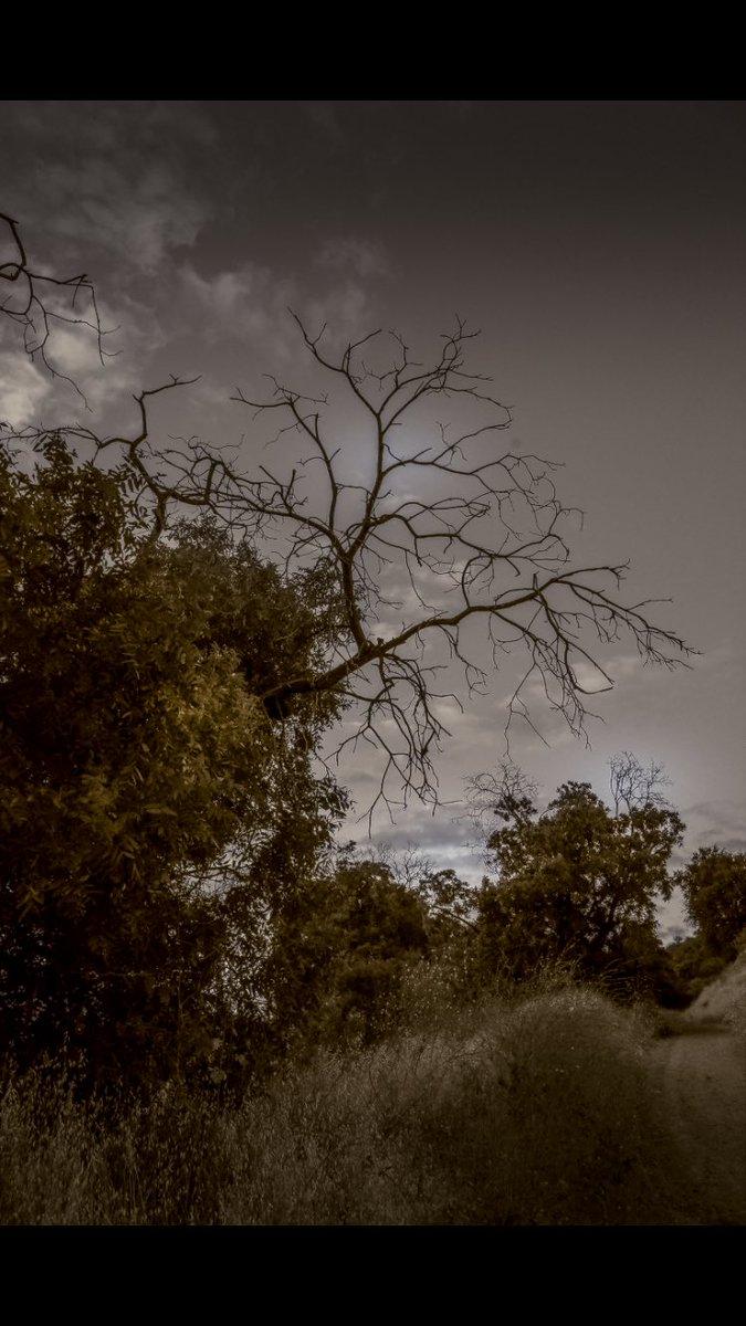 Darkness to Follow... . #NatureLover #NatureCapture #Pocket_world #FiftyShadesOfNature #IiG_Landscape #NatGeoAdventure #naturephotos #natureloversgallery #naturegram #naturephotography #topangacanyon #la #malibu  #richardgreenla #travelphotography #sunsetphotography #sunset #lapic.twitter.com/y4ZMMiM5AR