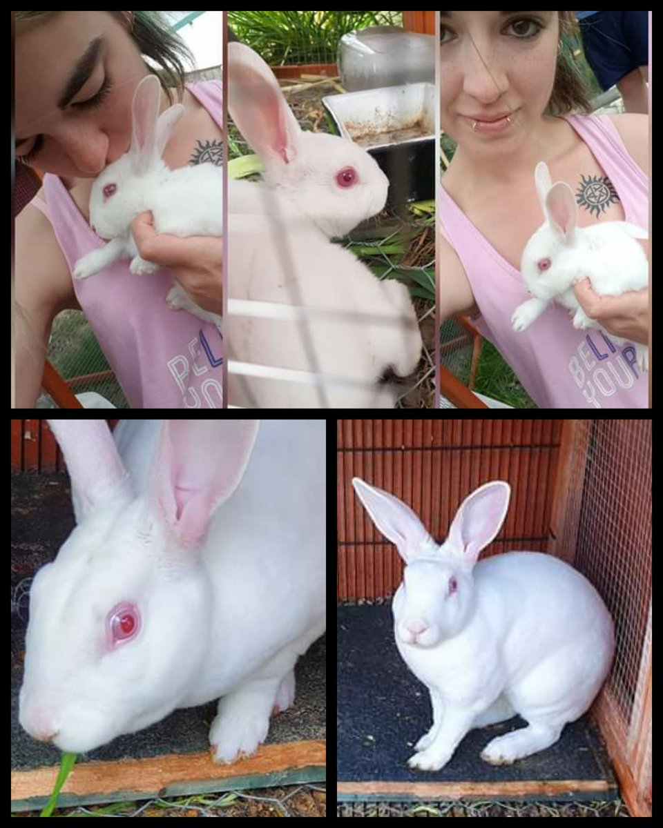 Loki. You are free to return to Wonderland, you mustn't be late... Alice is waiting. I'm going to miss you, bud, my little white rabbit... 😭💔🐇 16.October.2019—26.May.2020 https://t.co/rHZp2dyWjx