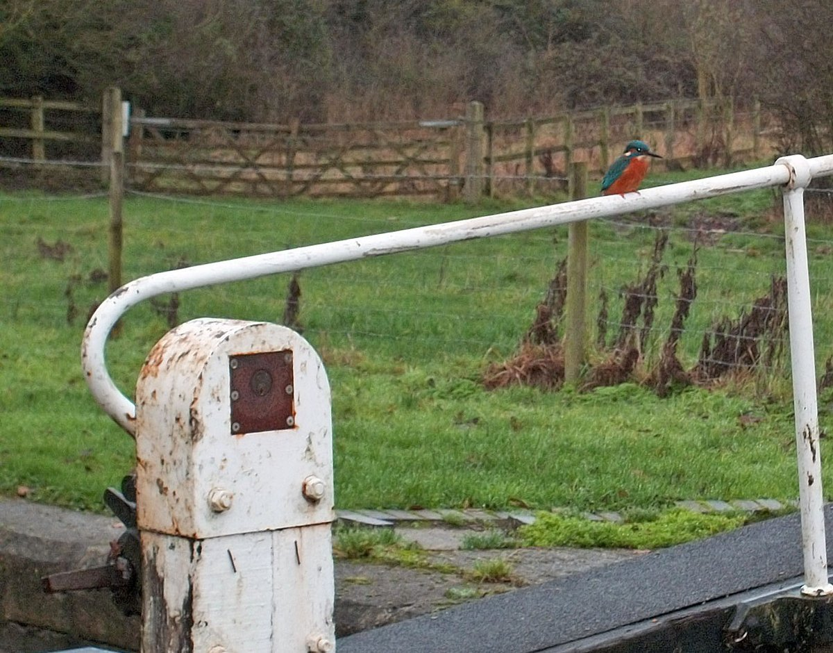 Photos from my archives   #wildlife & #nature - as seen from the #towpath  #CanalRiverTrust #Kingfisher   #Canals & #Waterways can provide #Peace & #calm for your own #Wellbeing  #LifesBetterByWater but #StayAlert #StaySafe