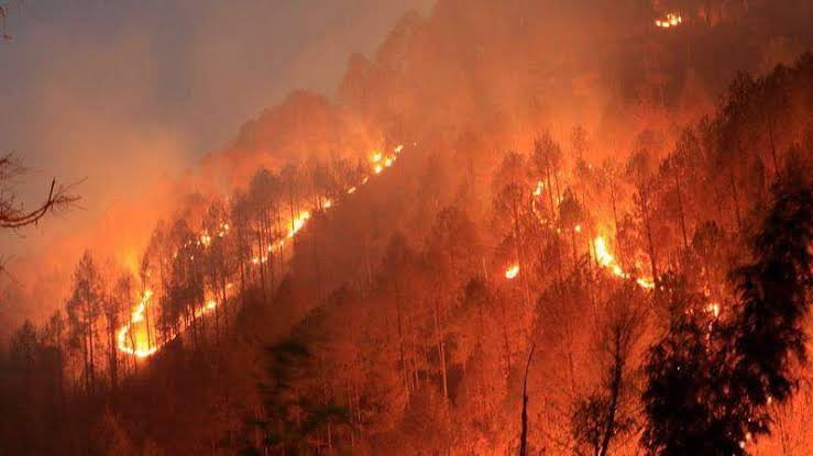 Our Forest are Burning. Please Raise Your Voice.  #UttarakhandForestFire #SaveTheHimalayas https://t.co/8YsQKAhRcL