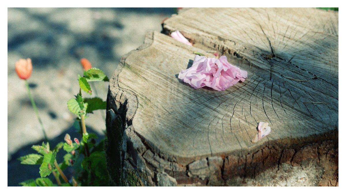 Memories  #ファインダー越しの私の世界  #写真好きな人と繋がりたい #キリトリセカイ #photographypic.twitter.com/LKLmJEBfSh