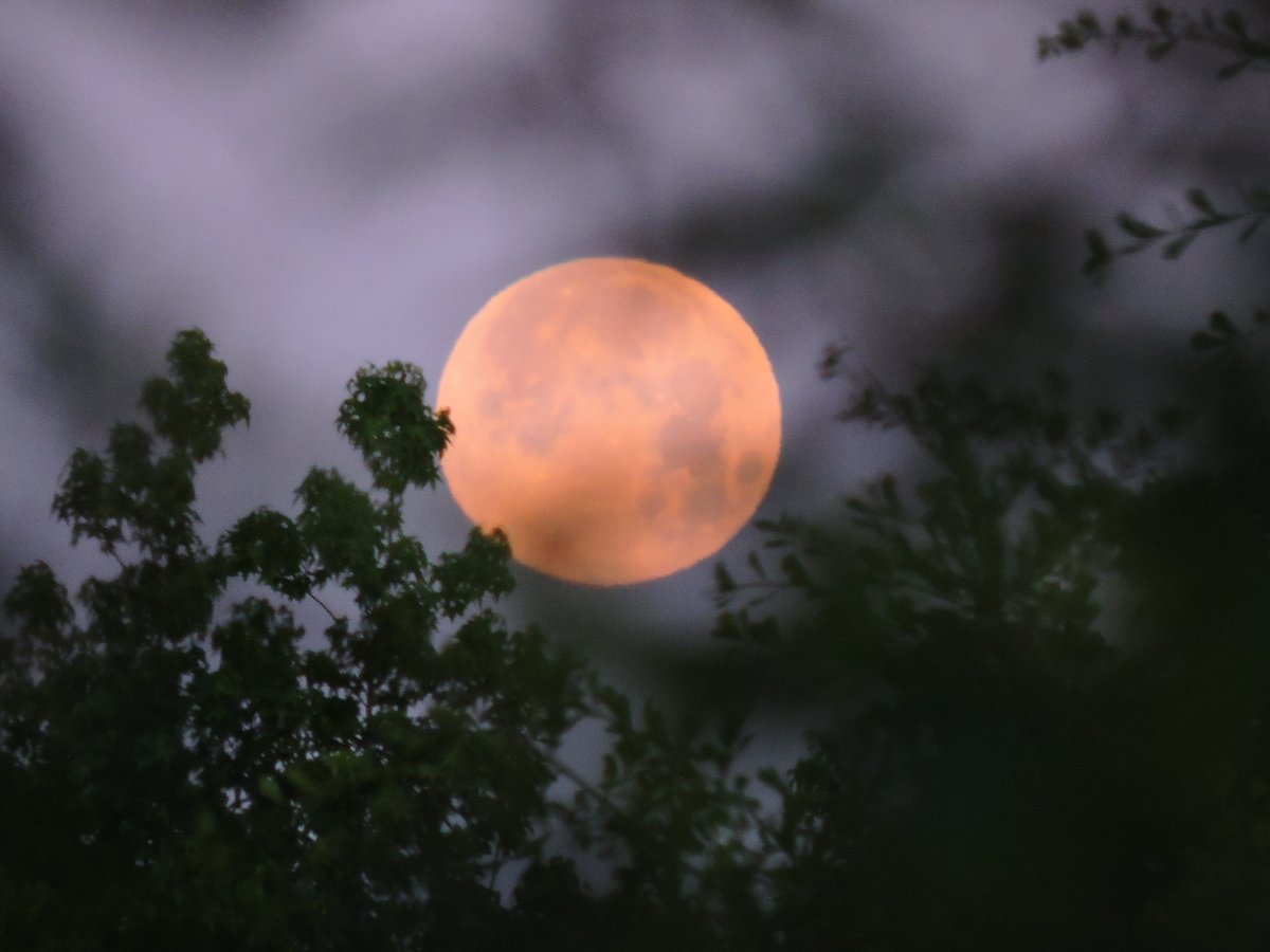 Supermoon #May2020  Photo By: Joseph Hill  #supermoon #fullmoon #moon #PinkMoon #pinkmoon2020 #moonlight #Dawn #morning #sky #trees #lookingup #beautiful #spectacular #Wow #awesome #peaceful #Spring #DayBreak #FullMoonOfMay #Supermoon2020 #VassNC #Maypic.twitter.com/wO4NyNUCc2