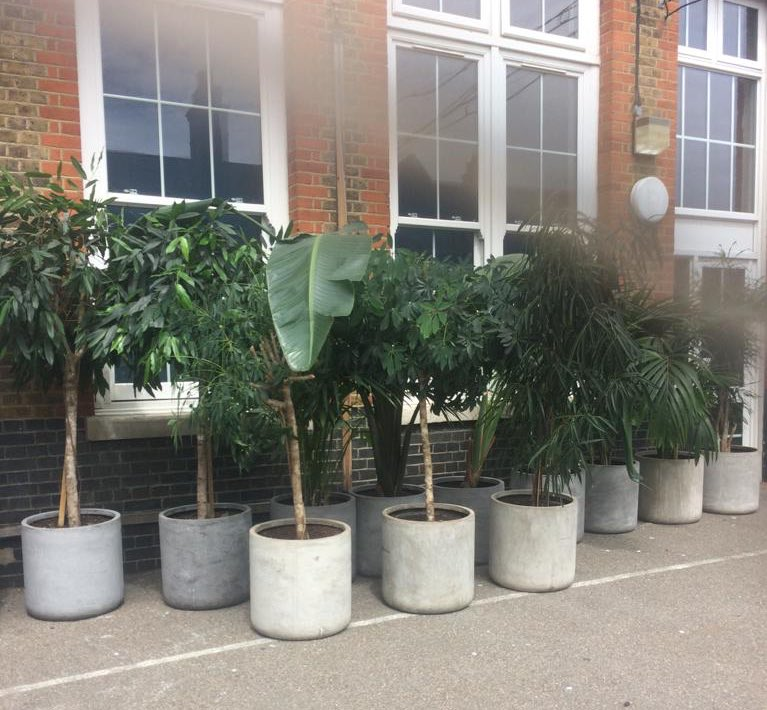 It feels amazing to receive this donation of plants to brighten up our interiors - thank you https://www.theplantman.co/  for your generosity   Be The Best You Can Be #BTBYCB #school #education #teachers #london #primaryschool #towerhamlets #edutwitter #plants #naturepic.twitter.com/kLCVEPV7fY