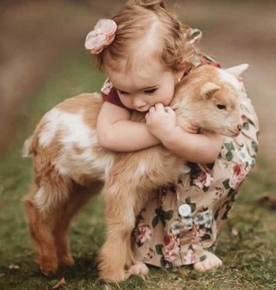 "#WritingCommunity!  #writerslift!  Drop your #book, #wip, #website, #blog, #poetry, #coverart...  In the immortal words of Steve Martin: ""Be so good they can't ignore you.""  #Follow, #RT, #heart, #comment  Bonus: In the event you're in need of good cheer...  Baby goat...pic.twitter.com/4xWLF1nTRj"