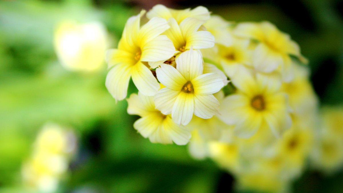 The magic of sunlight #flowers #flowerlove #gardening #photographypic.twitter.com/1ChTeMJR6M