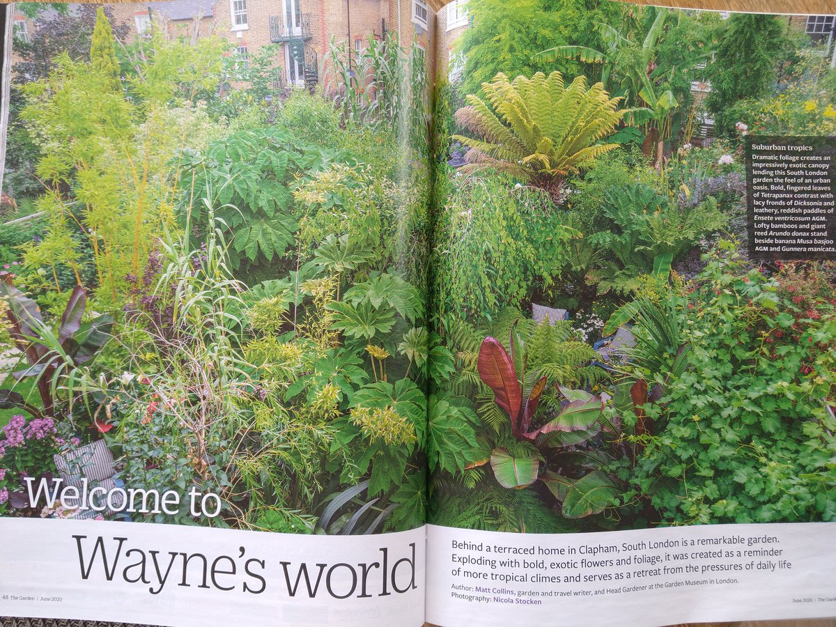 What a lovely surprise to open my copy of 'The Garden' to see your gorgeous lush garden - how many plants?  @AmielWayne #garden #gardeninspiration pic.twitter.com/MO3gmcSjoR