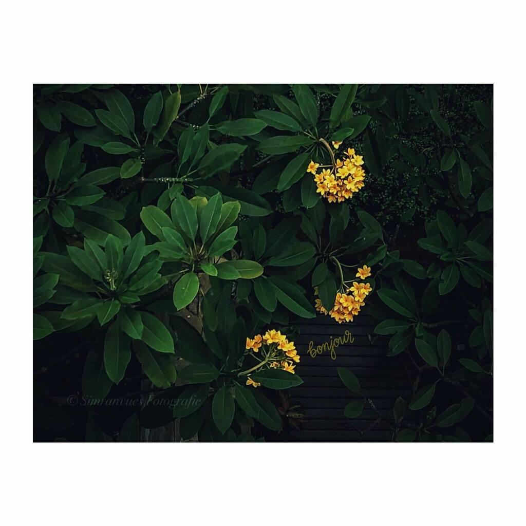 • La fleur •  ✦  Looking down and finding beauty ✦  #simranvues 🙏🏻  #fleurs #fleurs🌸 #flowers #jj_mobilephotography #shotoniphone @apple #afterlight2 #mobiography #tv_flowers #imageswithstories #instanusantarajakarta #iphonesia #dirumahaj…