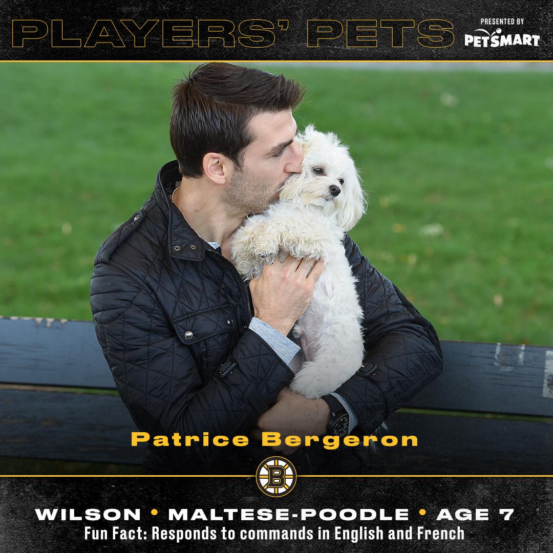 Wilsonnnnnn! 😍 More of Bergys #PlayersPets photos, pres. by @PetSmart ➡️ bbru.in/3d5LFwo