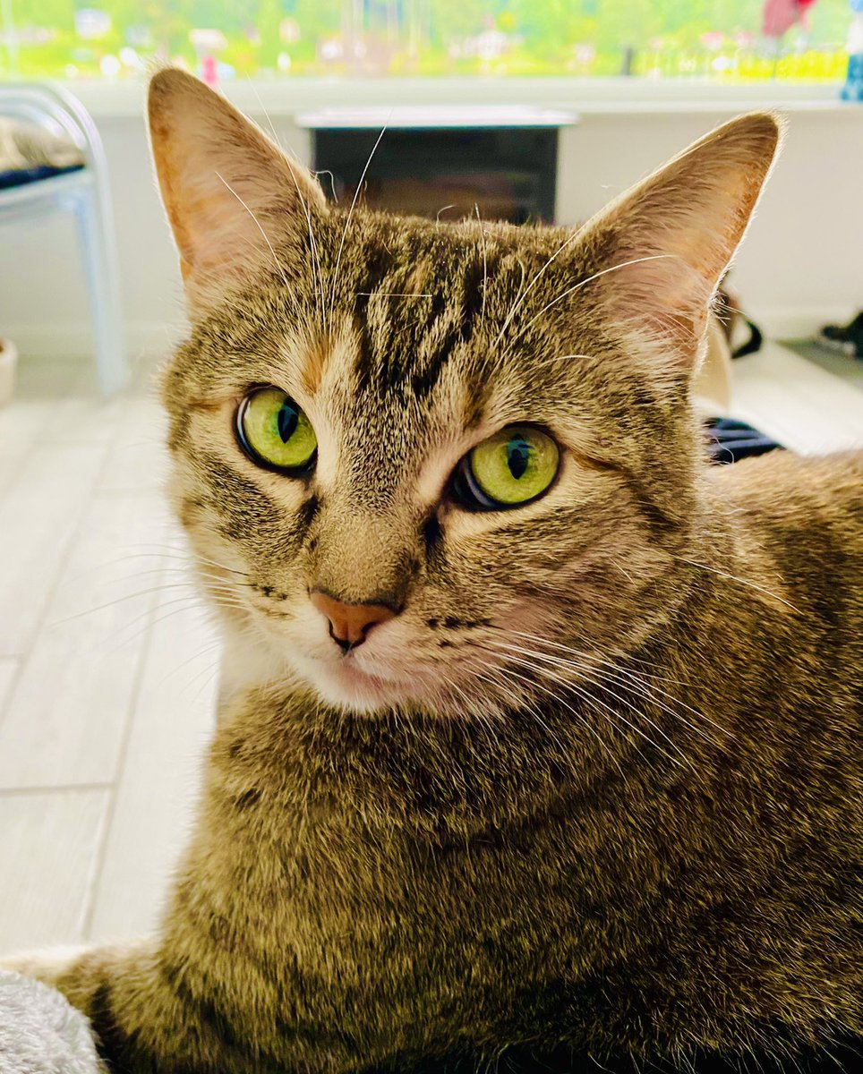 Shall we go on a walk to the lake today? Well... shall we? Shall we? - Hazel  #CatsOfTwitter #tuesdaymood #Tuesday #tuesdayvibes #cats https://t.co/OMIDQWih99