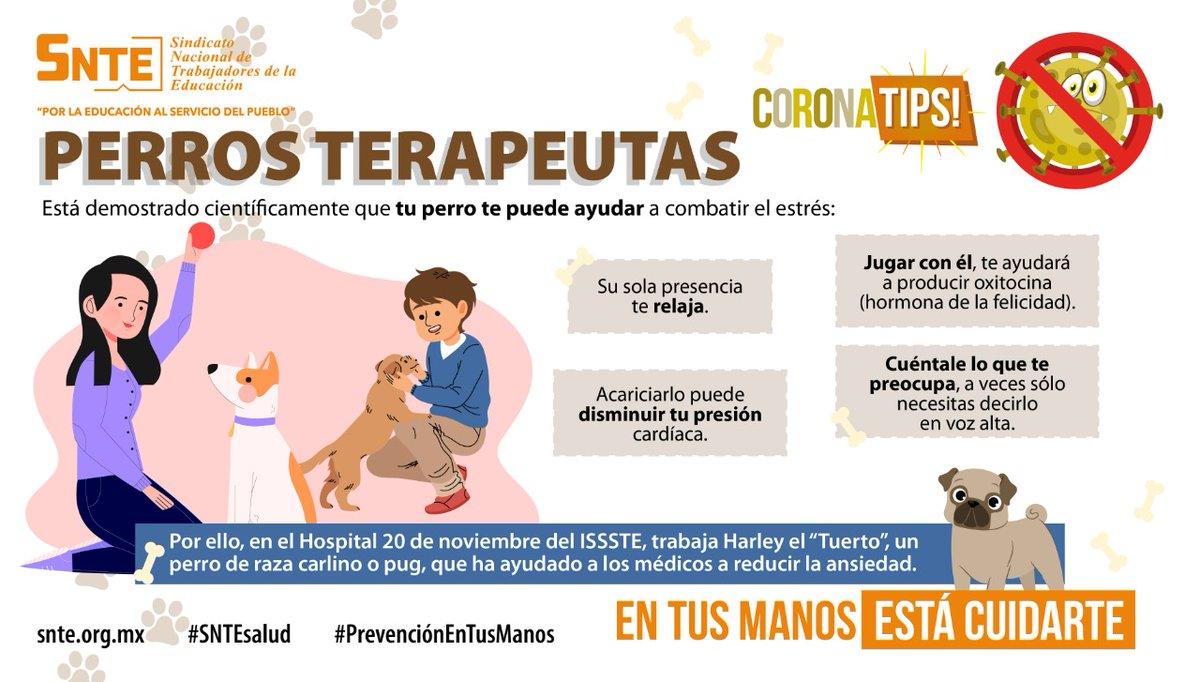 #SNTEsalud ⚕️ Es el perro 🐶 el mejor amigo del hombre 🐕🚶♀️ en #Cuarentena #coronavirus #COVID19 🦠 Tu mascota puede ayudarte a relajarte😉 y disminuir ansiedad😰 #QuedateEnCasa #FelizMartes #26Mayo México #CuidaAQuienTeCuida #DarkNetflix #PoderosoLimbo Witzel #COVID__19 Tear