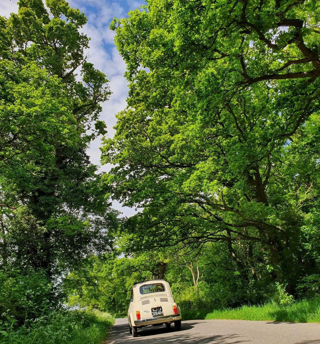Small car, big trees 🌲🌳  #fiat500 https://t.co/MMrE7TobR8