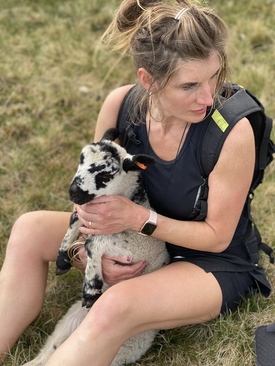 Saying goodbye to one of the pet lambs that we adopted onto a yow. She still remembers being bottle fed & comes to me before heading out to the moor with her mother. #shepherdess #yorkshire #springtime pic.twitter.com/SyDnTKk6v8