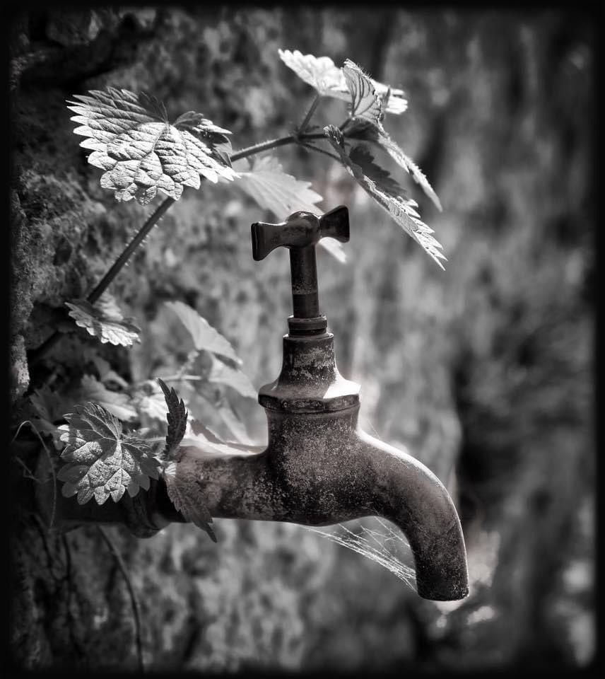 ... dry hostility ... #tap #metal #rust #decay #cobweb #stingingnettle #wall #stone #bw #blackandwhite #photography #monochrome #stilllife #mood #atmosphere #nostalgia #dream #silence #symbol #rejection #life