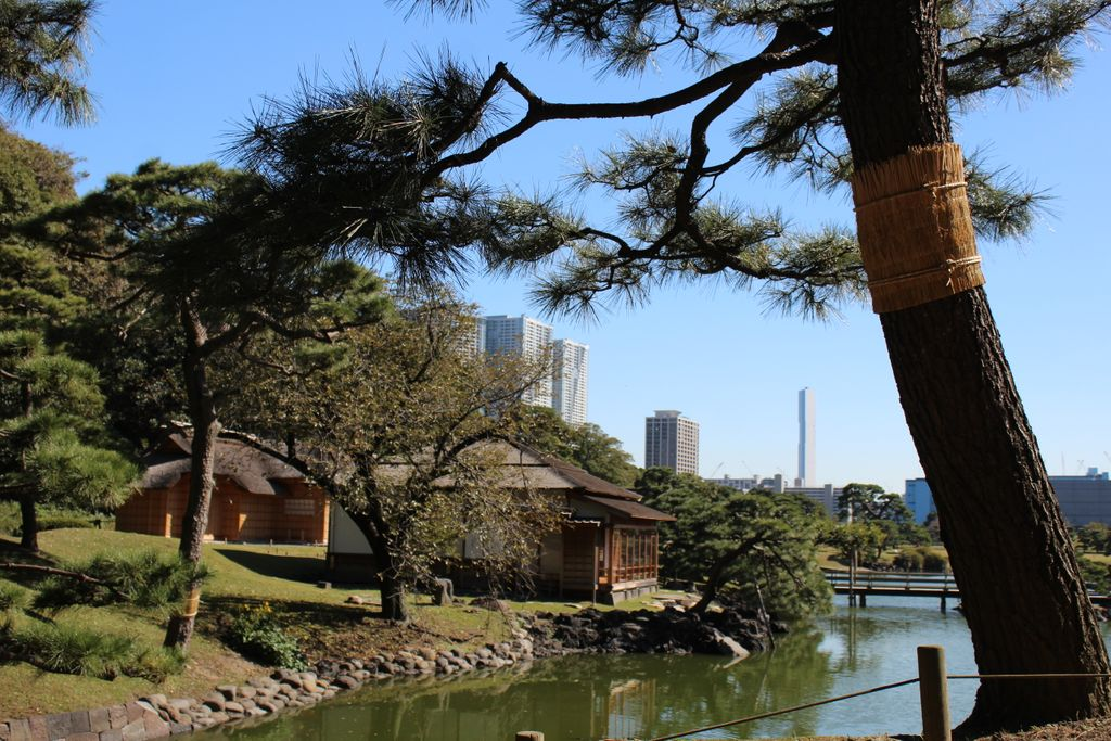 Beautiful walk in the park of Hama-rikyu #holiday #igtravel #instago #instagood #mytravelgram #photooftheday #TagsForLikes #TFLers #tourism #tourist #travel #travelgram #traveling #travelingram #travelling #trip #vacation #visiting #igers #garden #nature #tokyo #city https://t.co/jOMpnJ8Eul