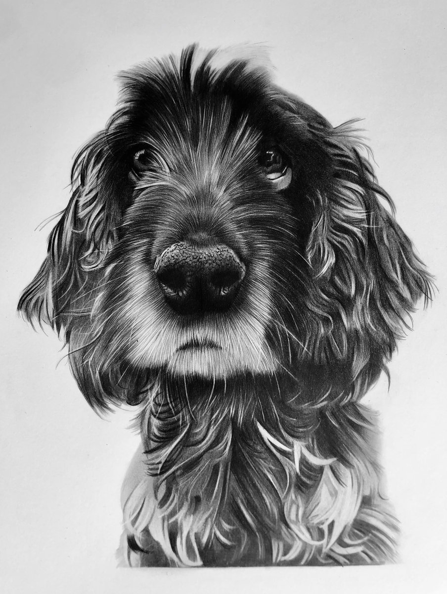 Time to reveal Molly to you! She was gifted to her owner at the weekend. Hand drawn in pencil. This face!  #dogsoftwitter #art #Pencildrawingpic.twitter.com/loD8j8bvMD
