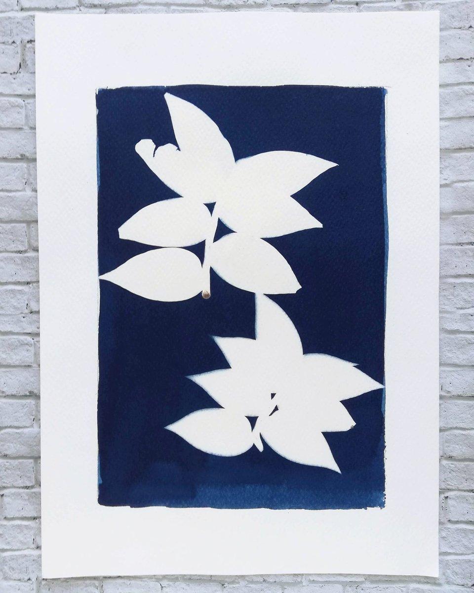 Tradescantia zebrina, cianotipia sobre papel. #naturaleza #cianotipia #oldphotography #fotografiapic.twitter.com/sJHvqop6rW