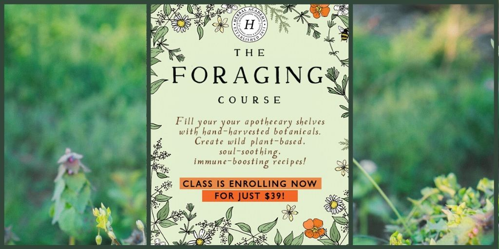 Field to apothecary! Forest to fork! Explore fun ways to prepare wild edibles and herbs in The Foraging Course --#freefood #wild #food #wildfoodplants #Apothecary #recipeideas #NatureWalks #homeschooling #MedicineMaking  http://shannaleaauthor.com/foragepic.twitter.com/FAffQd2Yon