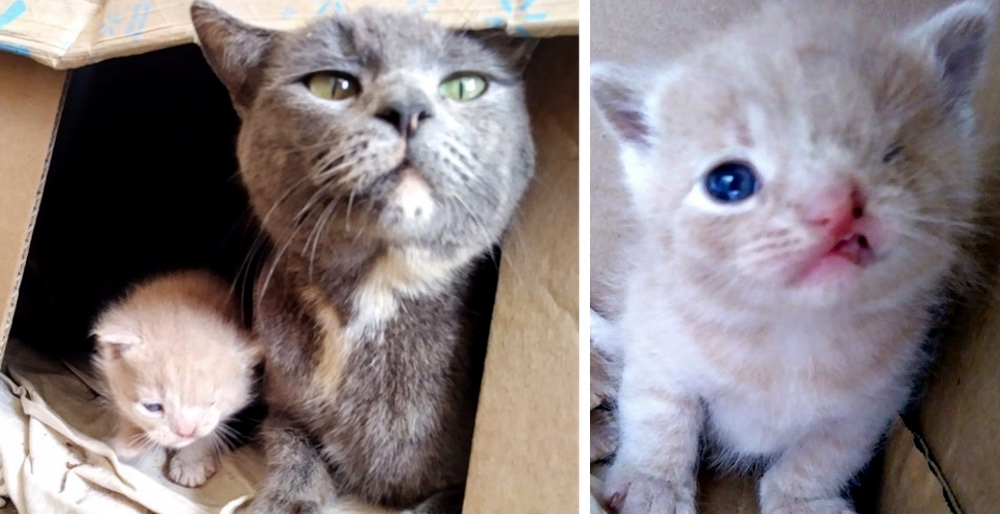 Stray cat took rescuers to her kittens - one of them has a permanent wink. See full story and updates: lovemeow.com/stray-cat-kitt…