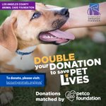 Image for the Tweet beginning: The Petco Foundation will match