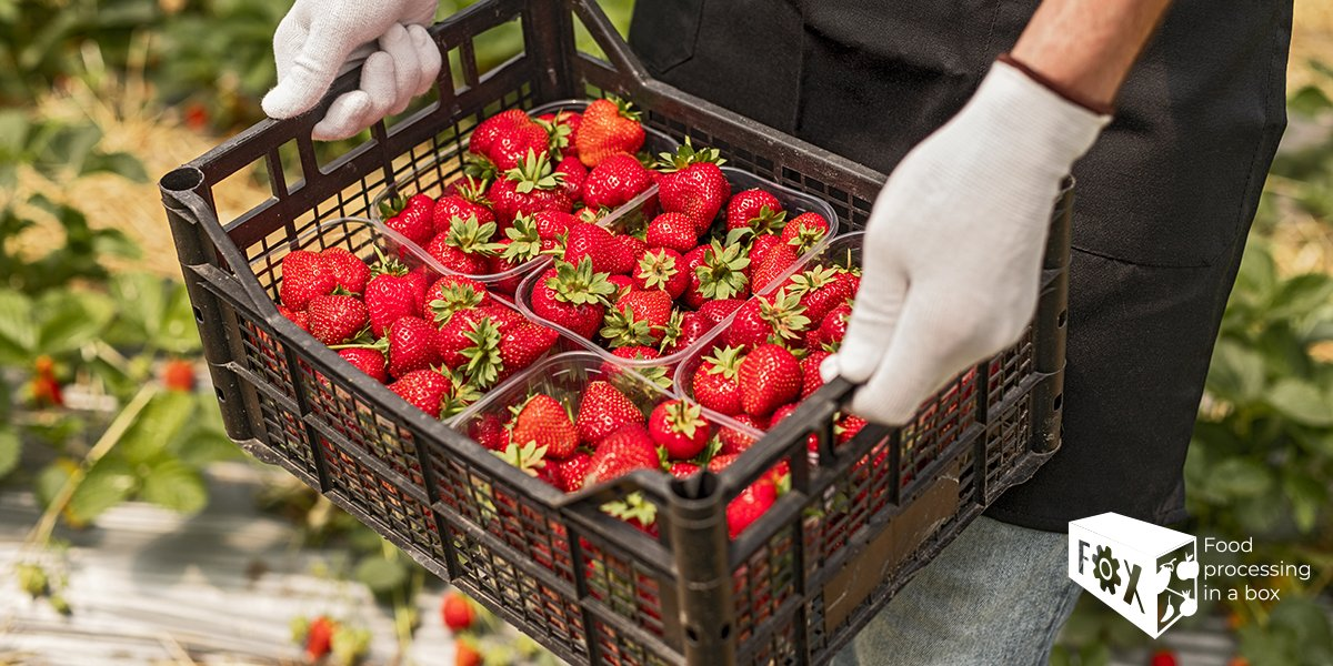 Spanish strawberry harvest is impacted by #COVID19 lockdown. 🍓 #FOXfoodinabox rethinks economy by allowing producers the opportunity to adapt their product and stay on the market. 👨🌾 Read the full article 👉 dw.com/en/no-hands-to…